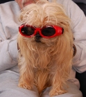 Doggles Sept 15